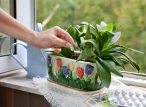 Чем подкормить комнатные цветы зимой в домашних условиях?