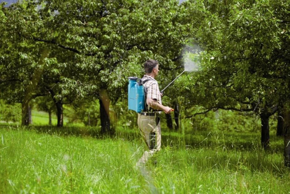 Чем обработать деревья и кустарники ранней весной от вредителей?
