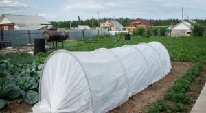 Что такое агроволокно, где и как его применять?