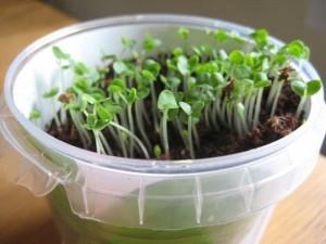 проращевание семян