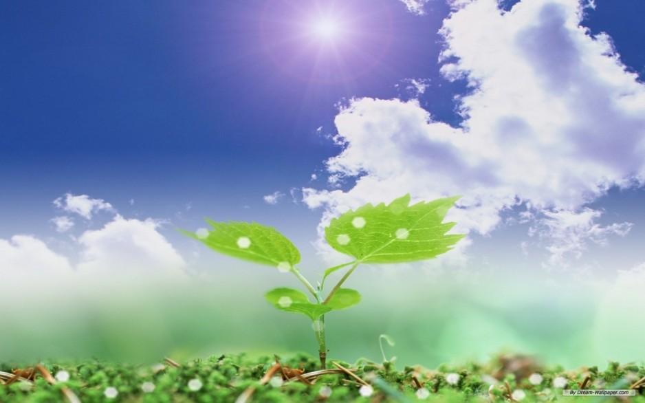 Биостимуляторы для растений