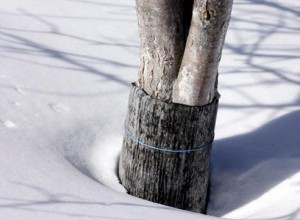 как защитить деревья от ожогов