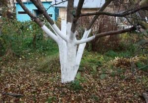 покраска деревьев
