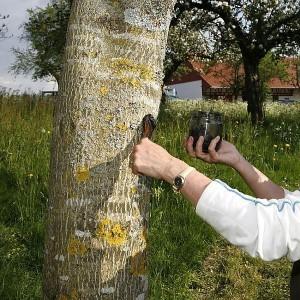 помощь деревьям