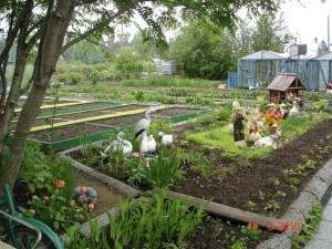 участок для тенелюбивых овощей