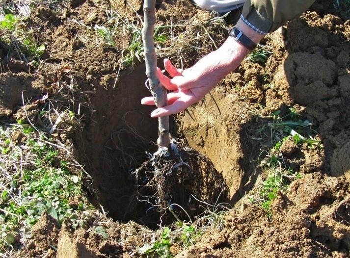 Когда сажать деревья в саду осенью 46