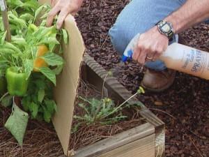 борьба с сорняками при помощи соли и уксуса