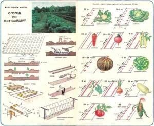 схема, применяемая немецкими фермерами при высадке огородных культур