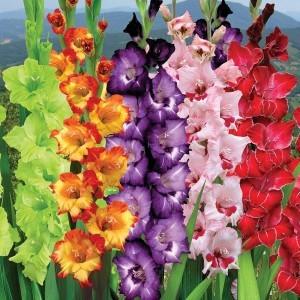 Что сажать в мае? Месяц май для огородника