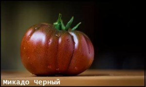 Помидоры в открытом грунте в Подмосковье: сроки посадки,выращивание, советы(фото)