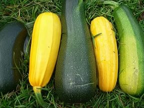 сажать семена кабачков в открытый грунт и на рассаду