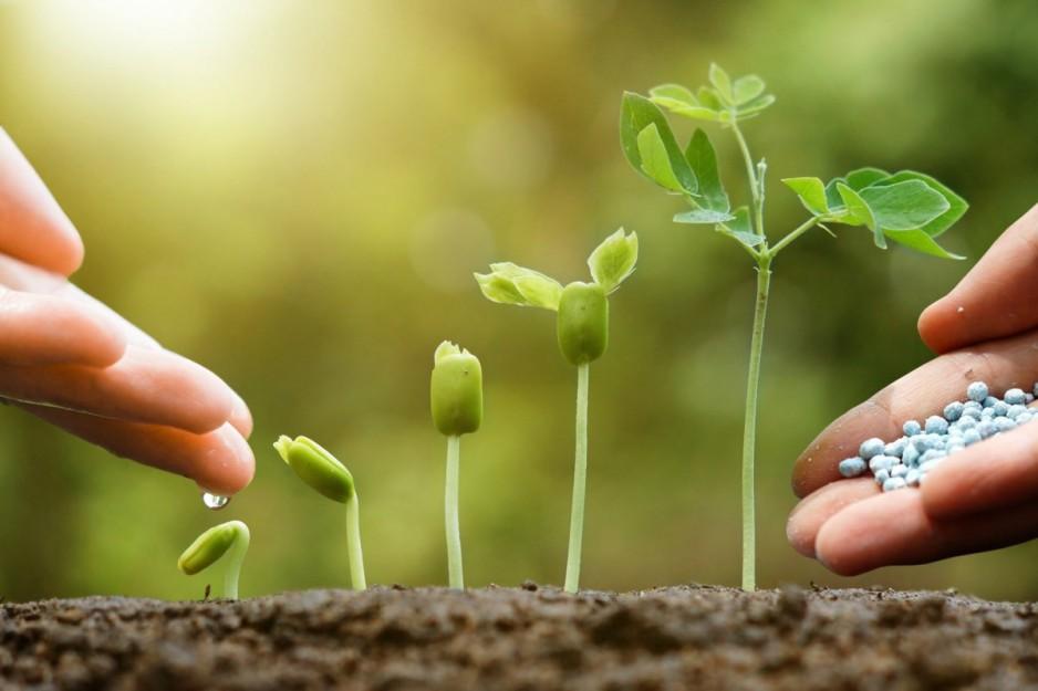 удобрения для огорода
