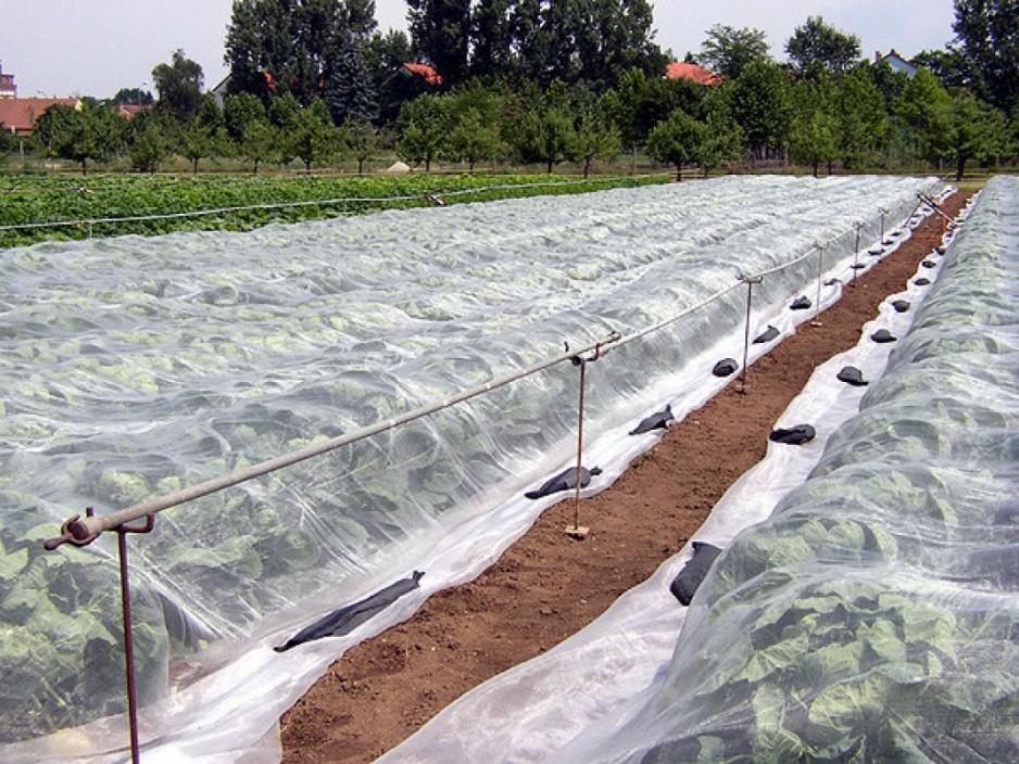 Что такое агроволокно