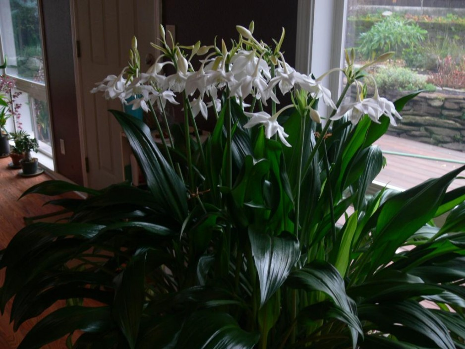 Чем подкормить комнатные цветы зимой