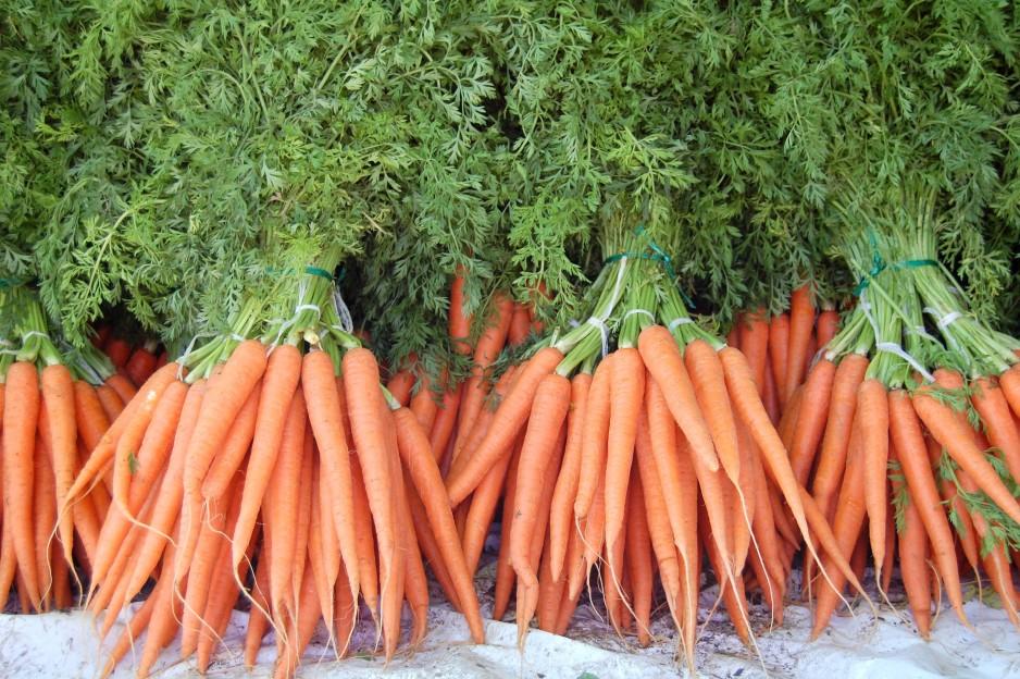 Правила посадки моркови