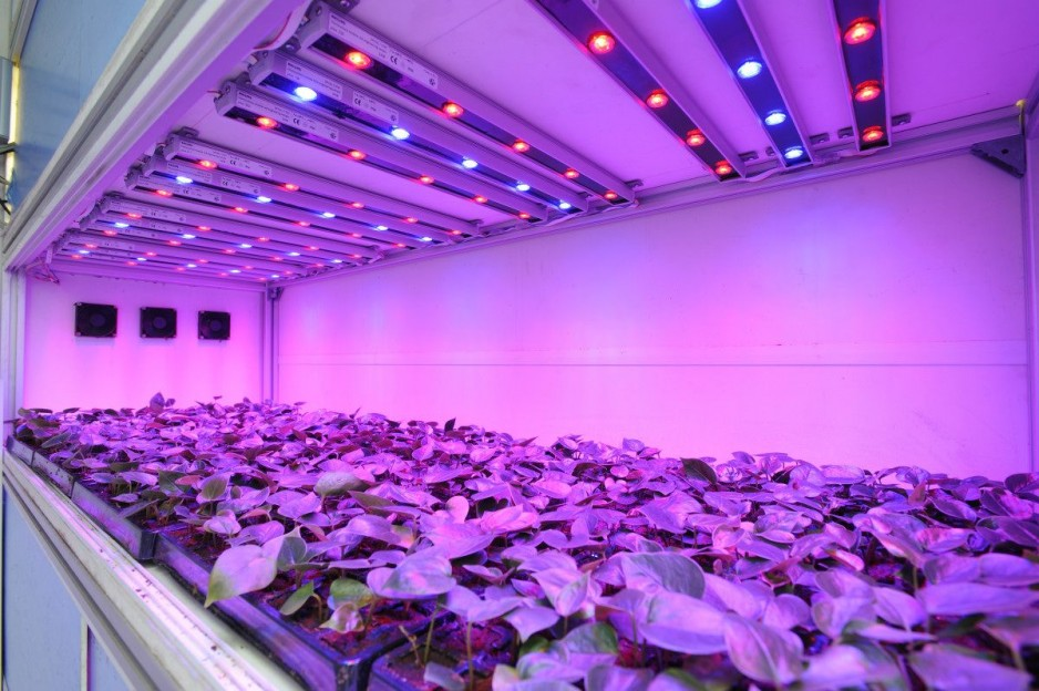 Светодиодные фитолампы для растений своими руками