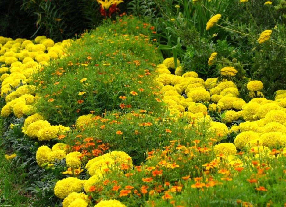 Многолетние,низкорослые цветы цветущие все лето
