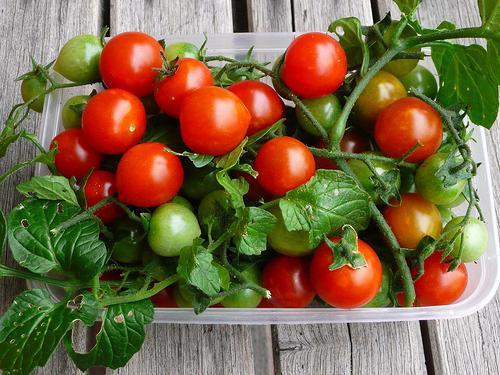 удобрения для томатов