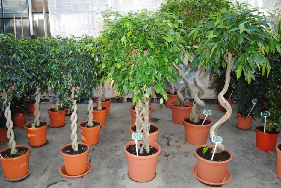 разновидности комнатных растений
