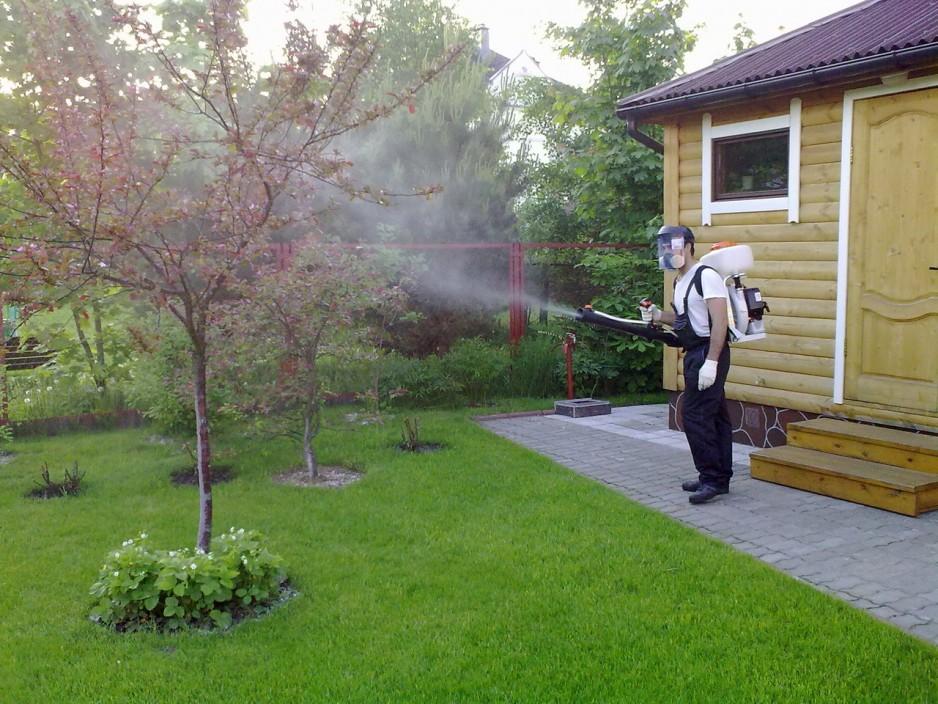 обработка деревьев и кустарников ранней весной