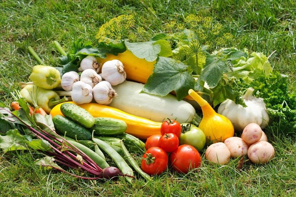овощи и фрукты с огорода