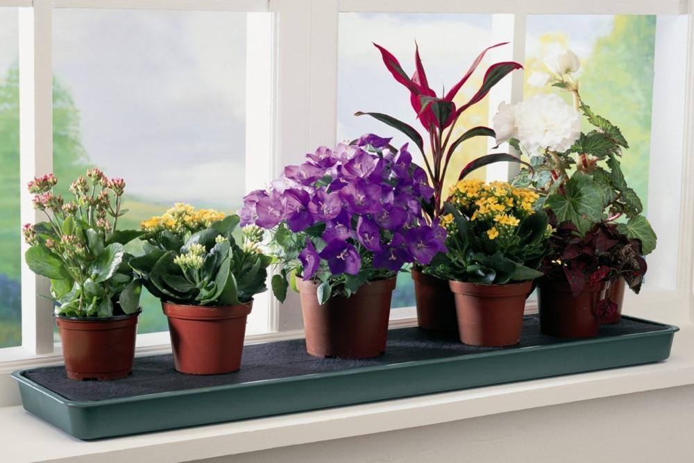 6 горшков с цветками на подоконнике