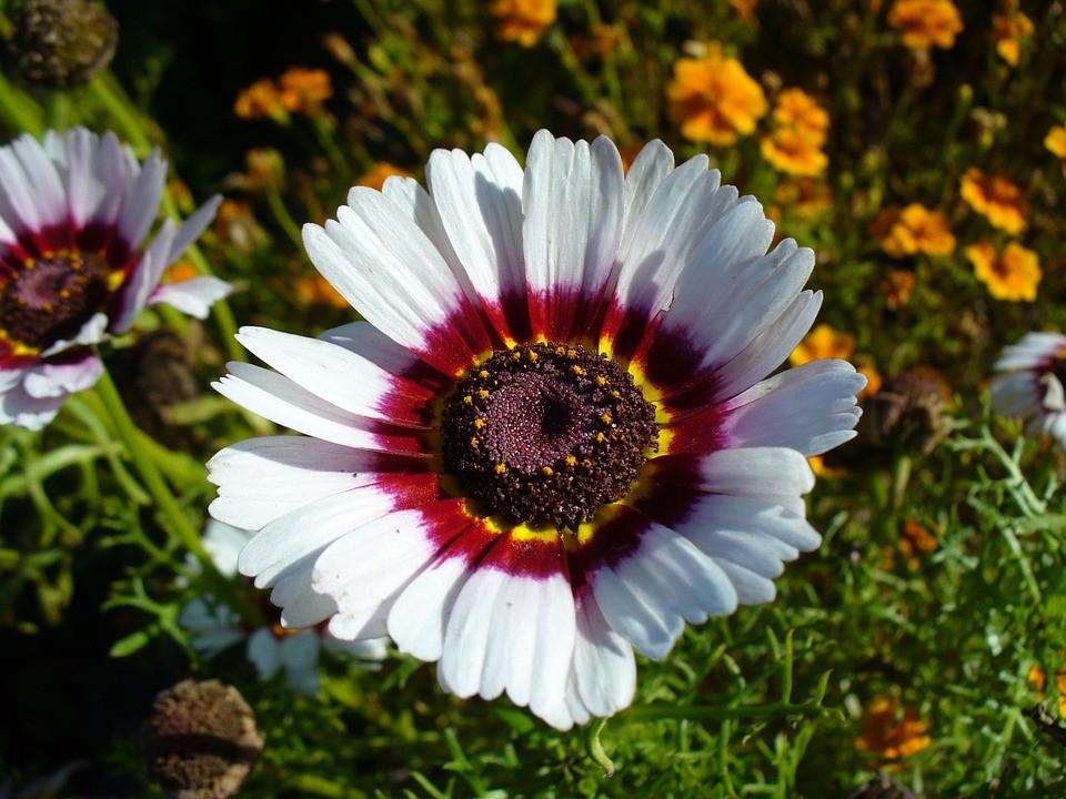 цветок белого цвета