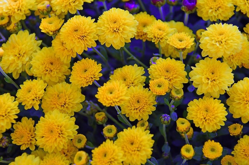 цветки желтого цвета