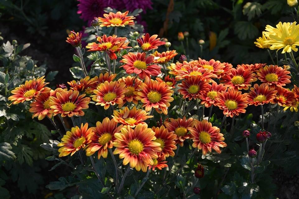 цветки оранжевого цвета