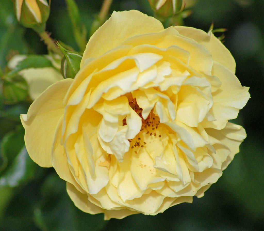 цветок жёлтого цвета