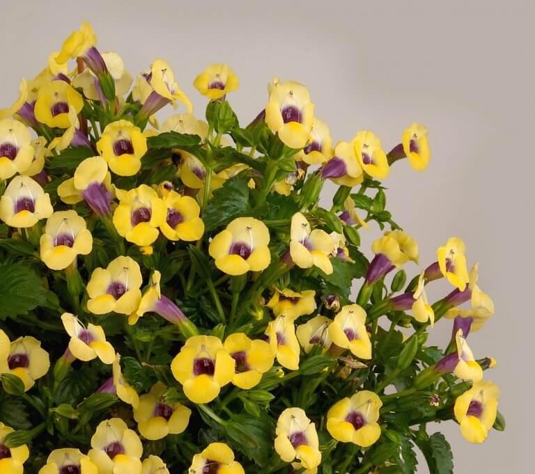 цветы жёлтого цвета