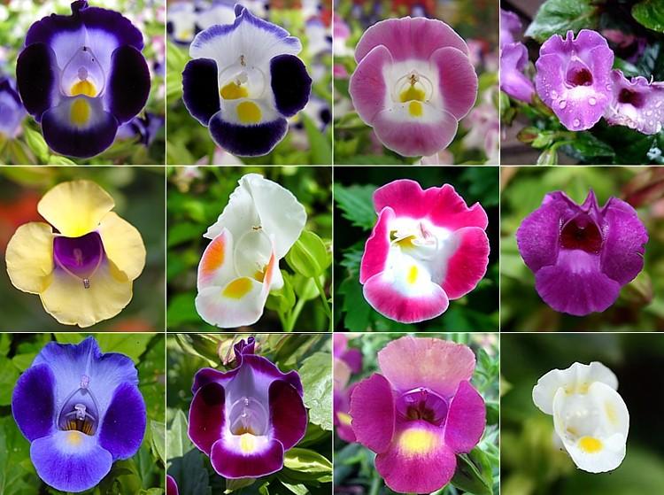 12 фотографий цветков разного цвета
