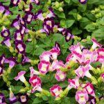 цветы фиолетового и розового цвета